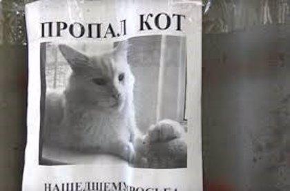 Esta espeluznante ilusión óptica hace que el gato de este cartel gire la cara y te siga con la mirada