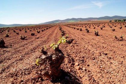 Junta amplia el plazo de ejecución de operaciones en los planes de reestructuración del viñedo hasta el 30 de junio