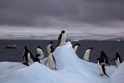 La Antártida, responsable de dos quintos del aumento del nivel del mar