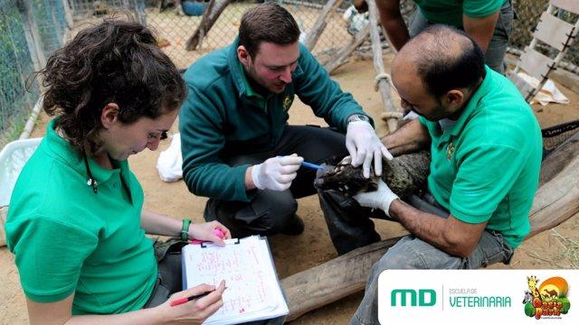Veterinaria MasterD y Oasis Park Fuerteventura