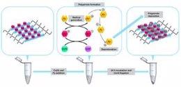 Os péptidos se ensamblan para formar minienzimas