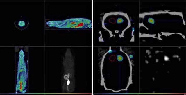 Biodistribución de [18F]FMISO en rata hemorrágica, y captación de este radiofárm