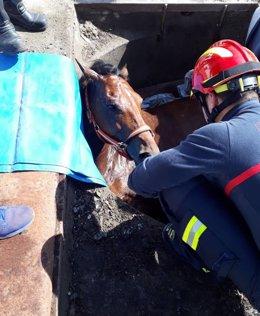 Bomberos tratan de sacar a una yegua de un foso al que había caído. 14-6-2018