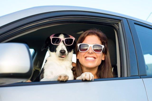 Mascota, perro, coche, sonrisas, dientes, gafas