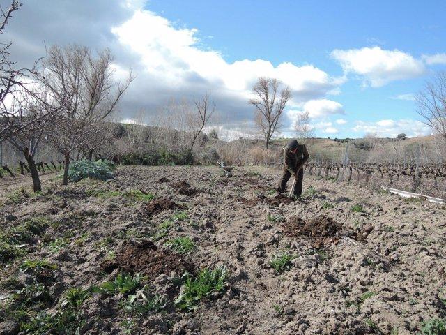 Trabajador agrario, trabajo agrario, cultivar, cultivo, cultivando, cultivos