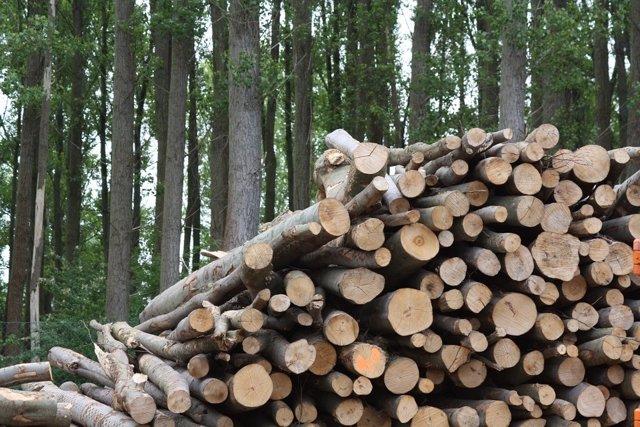 Troncos, energía biomasa