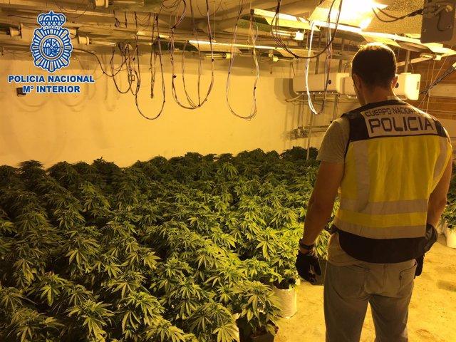 Cultivo de marihuana desmantelado en una vivienda de El Ejido