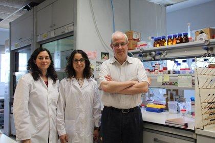 Crean un nuevo material que permite detectar rápidamente las infecciones provocadas por 'Candida albicans'
