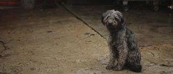 Més de 138.000 gossos i gats van ser abandonats a Espanya el 2017 (FUNDACIÓN AFFINITY - Archivo)