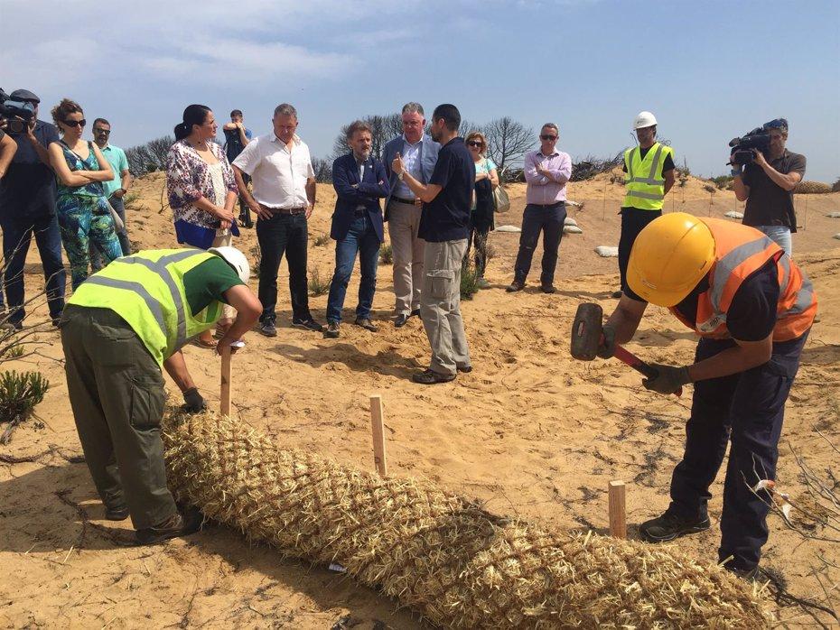 Foto: La restauración de la zona del incendio de Moguer comenzará en otoño (EUROPA PRESS)
