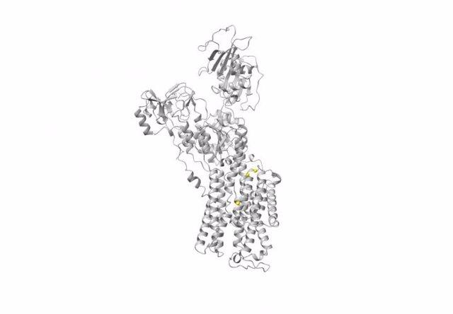 Representación en 3D del gen ATP1A3