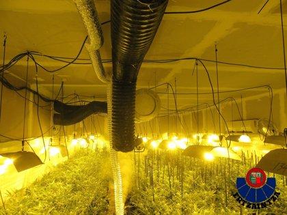 Cuatro detenidos tras localizarse una plantación de marihuana en un chalet de Vitoria