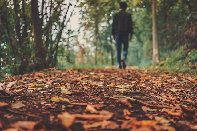 Otoño, paseo, caminar, hombre, andando