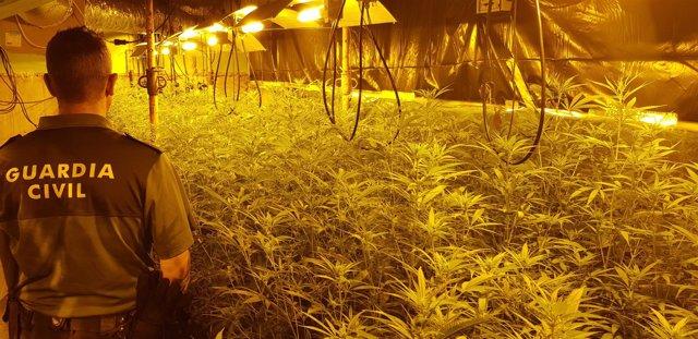 Localizada una plantación de marihuana en una vivienda de Meis