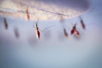 Zambia se propone erradicar la malaria para 2021