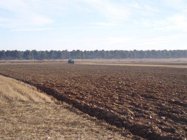 Terreno de cultivo.