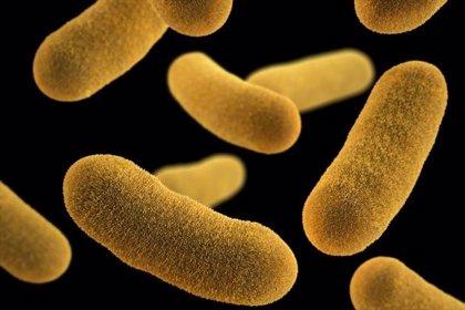 Hallan marcadores de bacterias intestinales que podrían detectar precoz la enfermedad hepática