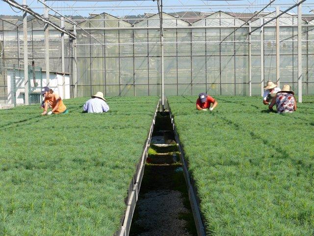 La empresa p blica tragsa destin 12 4 millones de euros a for Viveros ourense