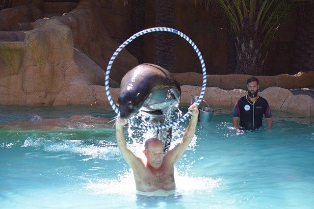 Terapia con leones marinos DomusVi Babel