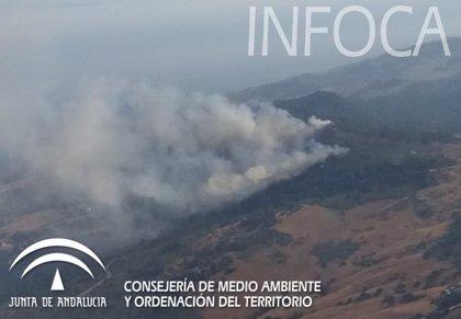 Estabilizado un incendio forestal declarado en un paraje de Algeciras