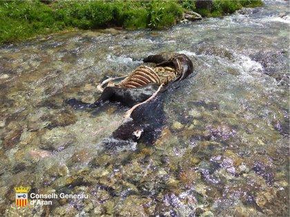 El oso Goiat mata otra yegua en la Val d'Aran (Lleida)
