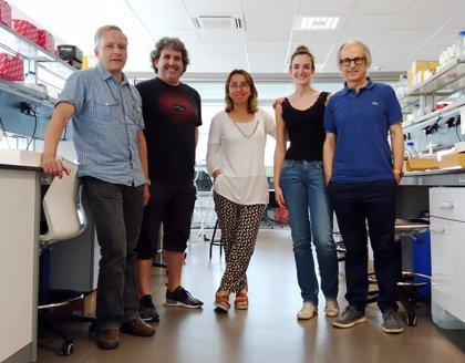Hallan una clave molecular para retrasar la progresión de la esclerosis múltiple