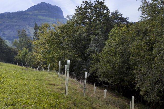 Arboles. Bosques. Naturaleza. Medio Rural. Cantabria