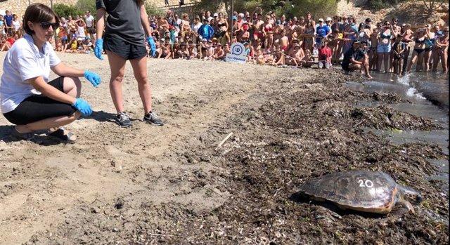 Una de las tortugas liberadas en L'Ametlla de Mar
