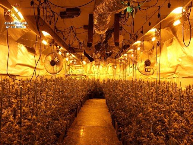 Plantación de marihuana en el interior de una vivienda en Gallur