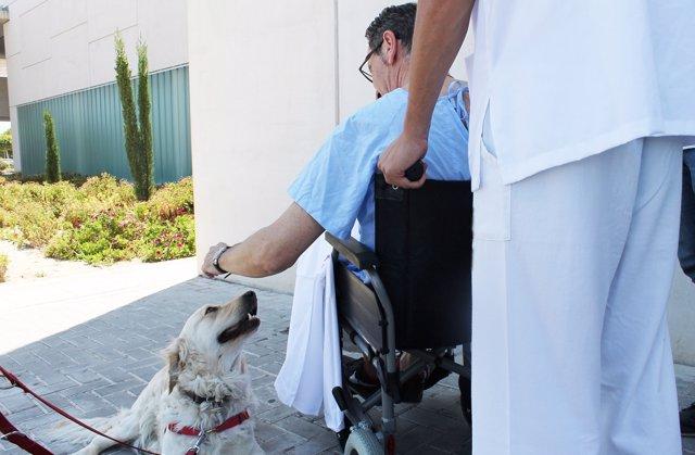 Paciente con un perro