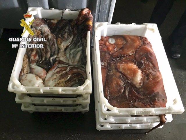 Incautados 55 kilos de pulpo en Ribeira