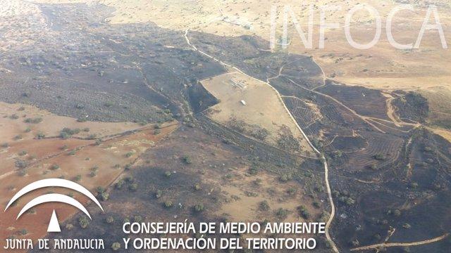 Zona afectada por el incendio en El Viso