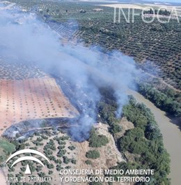 Incendio forestal en Montoro (Córdoba)
