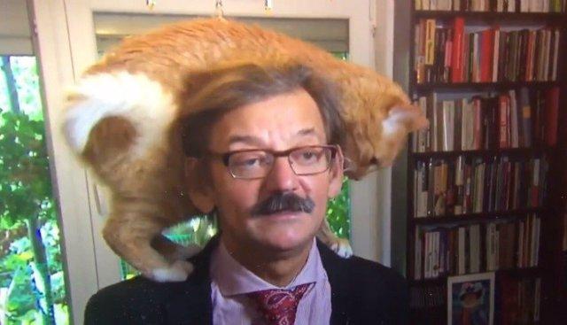 Lisio, el gato que interrumpe una entrevista