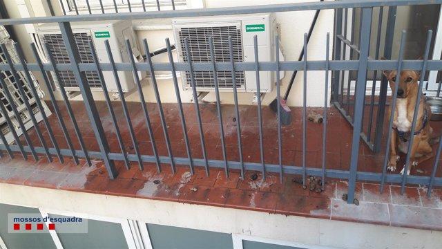 Rescatan a una perra abandonada sin comida ni agua en un balcón