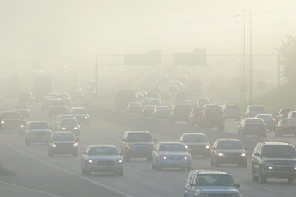 Estudiarán la calidad del aire de Barcelona y Madrid con líquenes sensibles a la polución