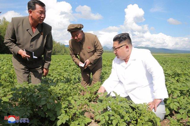 El líder norcoreano, Kim Jong Un, en una granja