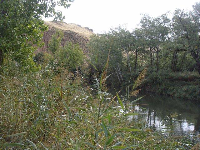 Río Henares en Alcalá