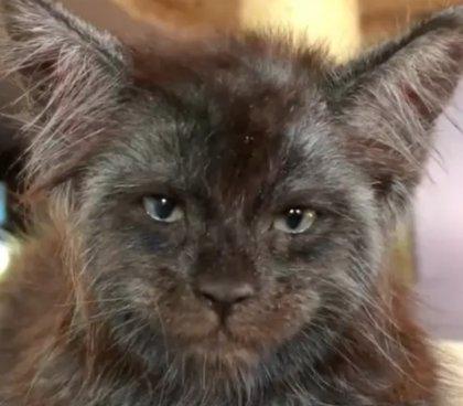 La cara de este gato a muchos les recuerda la de un humano y sus fotos lo confirman