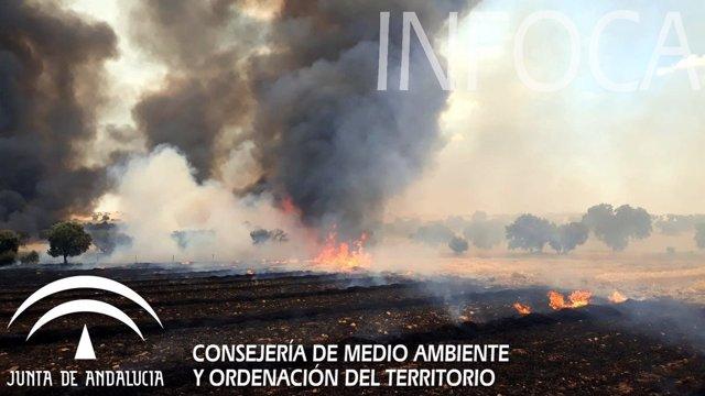 Zona afectada por el fuego en Fuente Obejuna