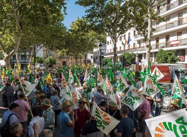 Concentración en Sevilla en defensa del sector de la aceituna de mesa.