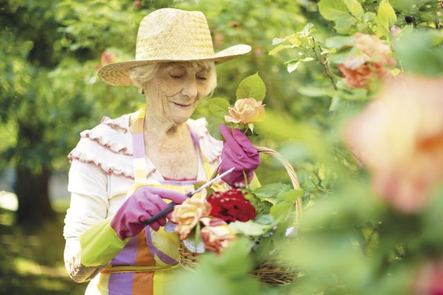 Mayor, anciana, jardín, jardinería