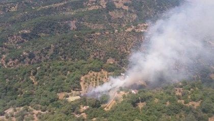 Controlado el incendio forestal declarado en el paraje La Pedrera de Jubrique