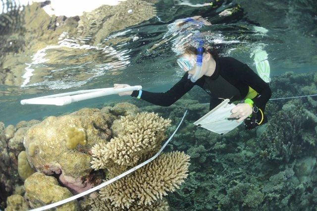 Investigación de arrecife de coral en Chagos