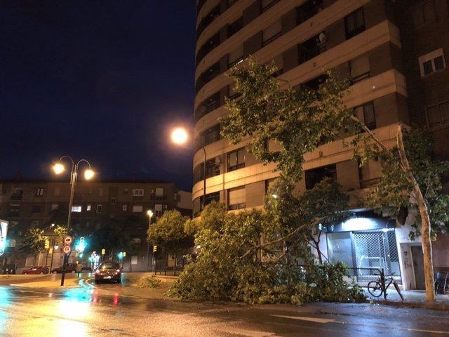Uno de los árboles derribados por la fuerte tromba de este miércoles en Zaragoza