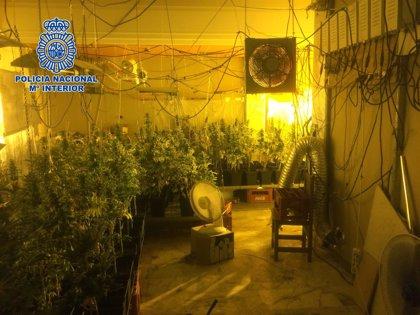 Detenido un hombre acusado de custodiar una plantación de marihuana y vender drogas en Almería