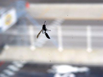El 3% de los españoles sufre reacciones alérgicas generalizadas al veneno de avispas y abejas, según datos de SEAIC