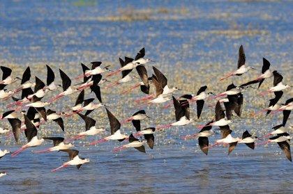 WWF exige a Ribera que salve Doñana y actúe con Andalucía para cerrar pozos y cultivos ilegales