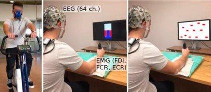 Hacer 15 minutos de ejercicio aumenta la conectividad cerebral y mejora las habilidades motoras
