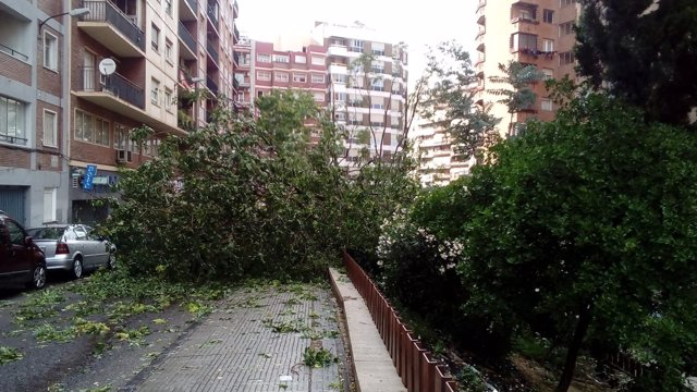Árbol Caído Sobre La Calzada Tras Una Fuerte Tormenta